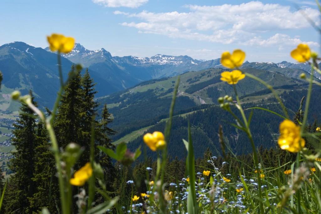 Alpen im Sommer