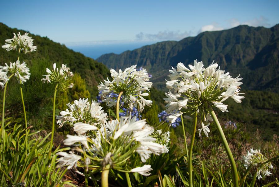 üppige Flora und Fauna