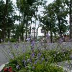 near the Theophania Park, Kiew