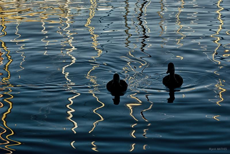 Lichtspiel im Wasser