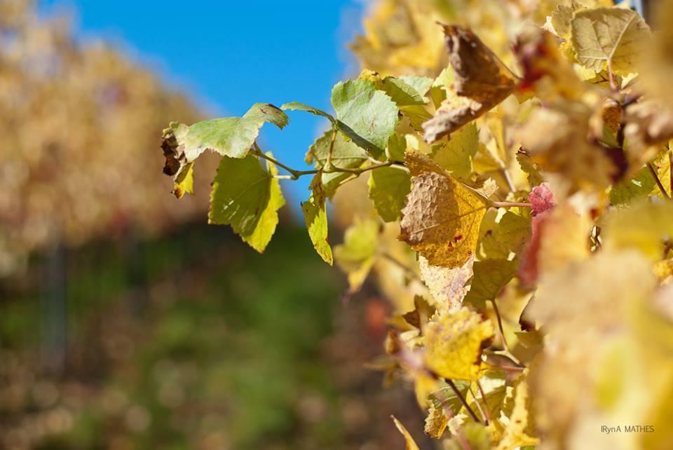 Pfalz im Herbst