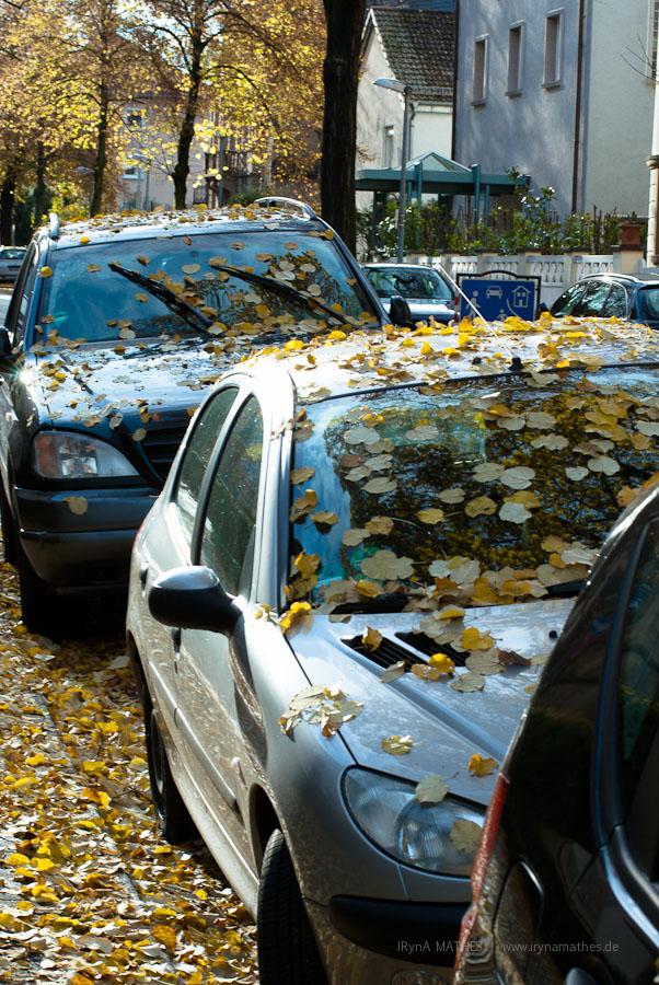 Farben, Blätter, Autos/ Картинки в городе