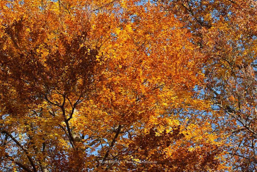 Herbstzauber / Осеннее волшебство