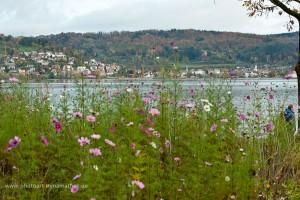 Bodman, Bodensee