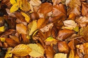 Herbst mit seinen Farben