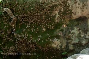 Im Schmetterlingspark