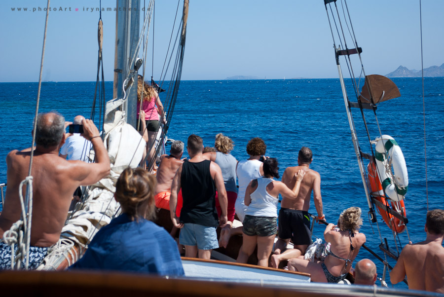 Auf dem Boot. Die Touris haben einen Delphin entdeckt