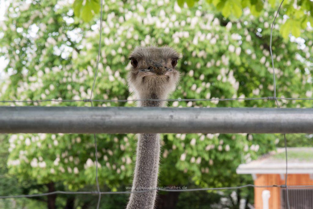 karlsruhe-zoo-179-WEB