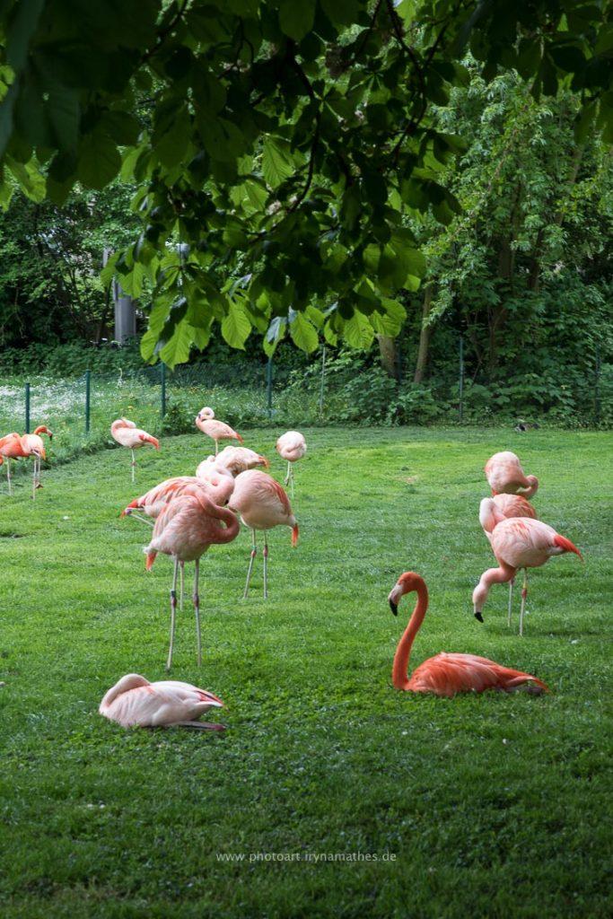 Im Karlsruhe Zoo