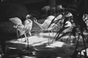 flamingo-karlsruhe-irynamathes-508-2
