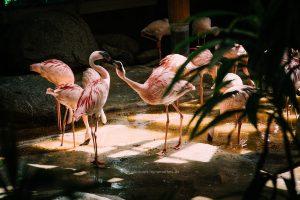 flamingo-karlsruhe-irynamathes-508