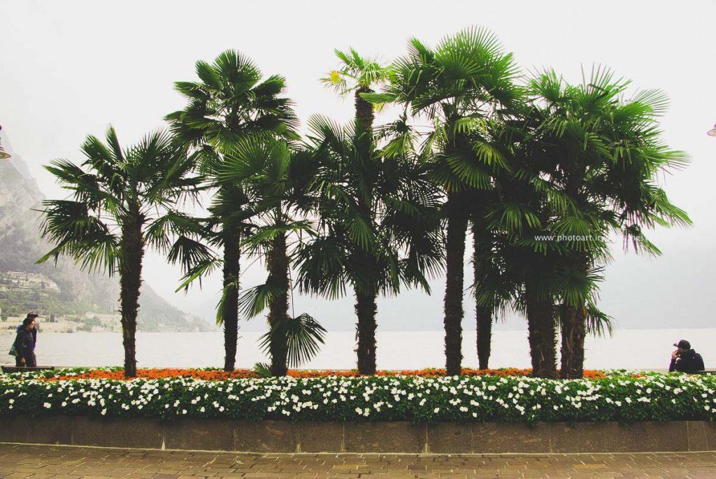 Gardasee-291-irynamathes