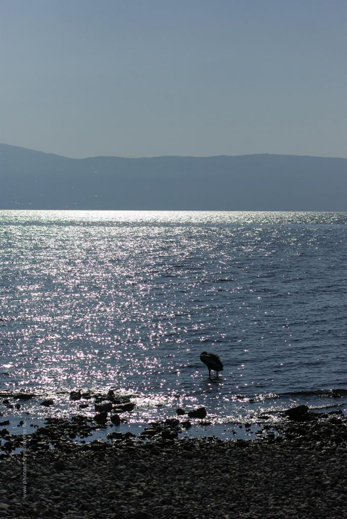 Gardasee-376-irynamathes