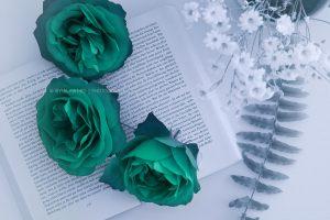 rosen-buch_2378-blau2
