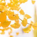 Herbstliche Inspirationen