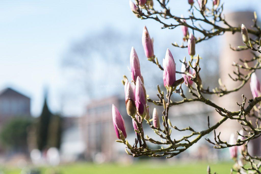 Frühling in Karlsruhe, 2020