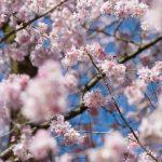 Frühling in Karlsruhe