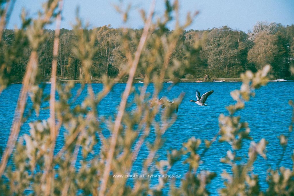 Landschaft-Natur-Dettenheim-web-4391-2