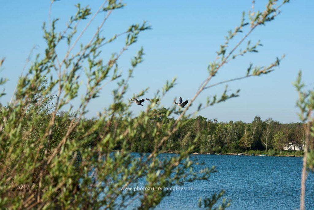 Landschaft-Natur-Dettenheim-web-4392