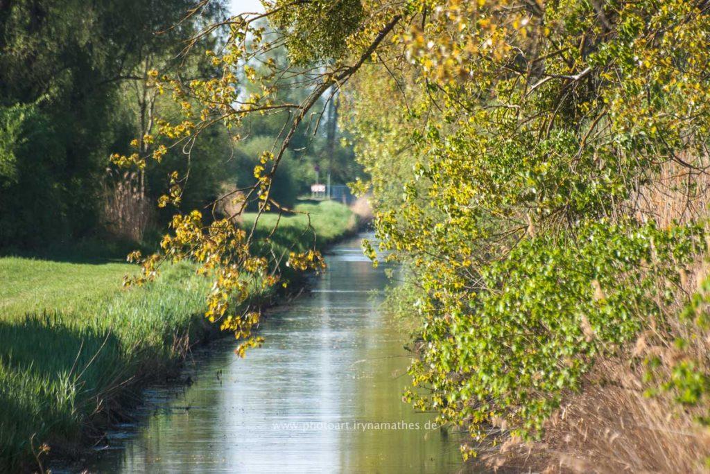 Am Baggersee. Naturfotografie Iryna Mathes