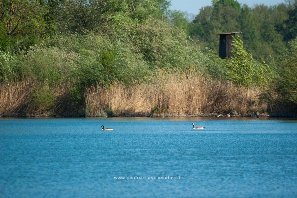 Landschaft-Natur-Dettenheim-web-4452