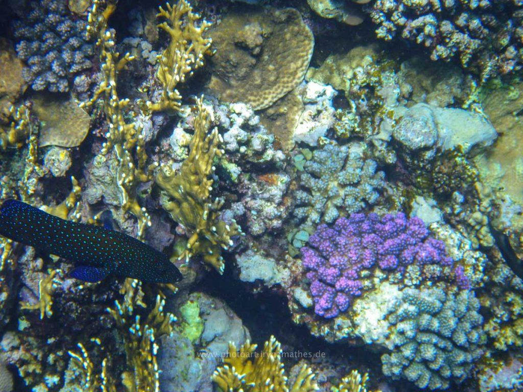 Egypt-unterwasser-web-0285
