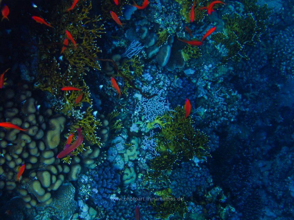 Egypt-unterwasser-web-0328