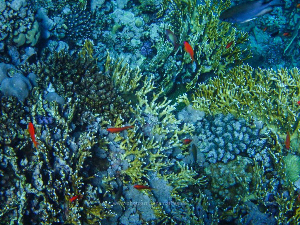 Egypt-unterwasser-web-0348