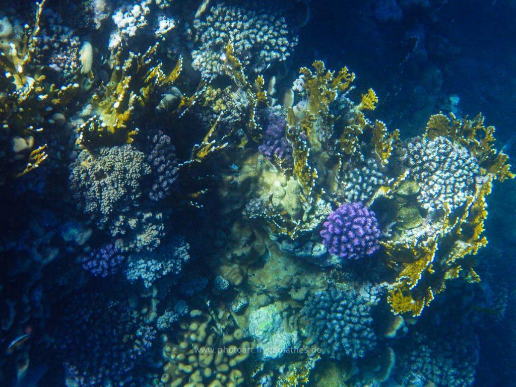 Egypt-unterwasser-web-0381