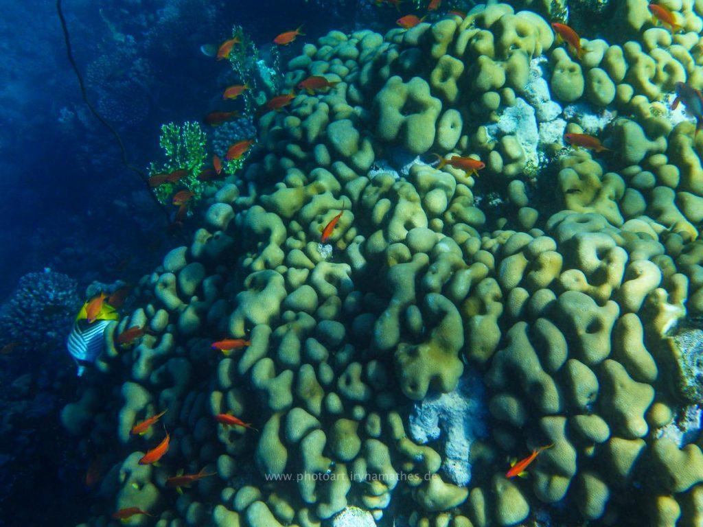 Egypt-unterwasser-web-0392