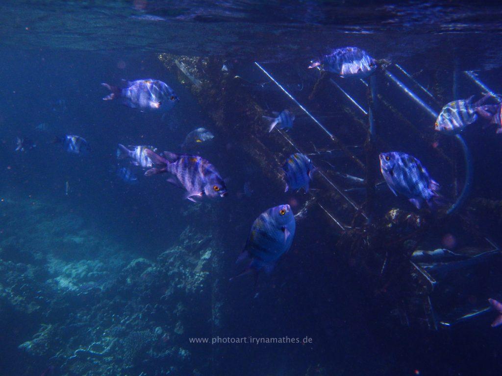 Egypt-unterwasser-web-0404