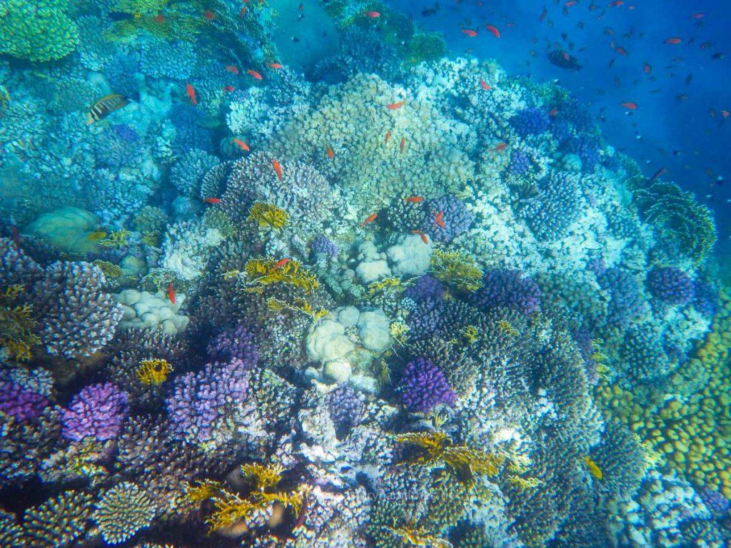 Egypt-unterwasser-web-0420