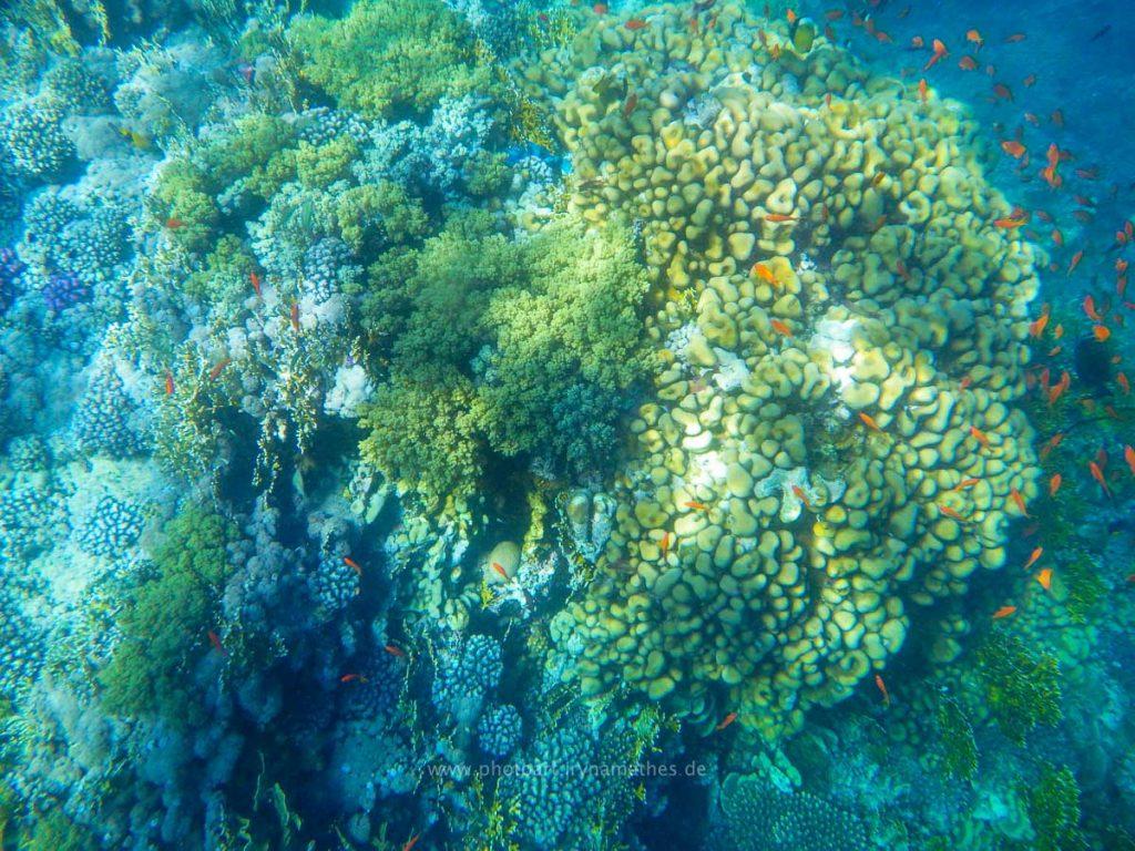 Egypt-unterwasser-web-0428