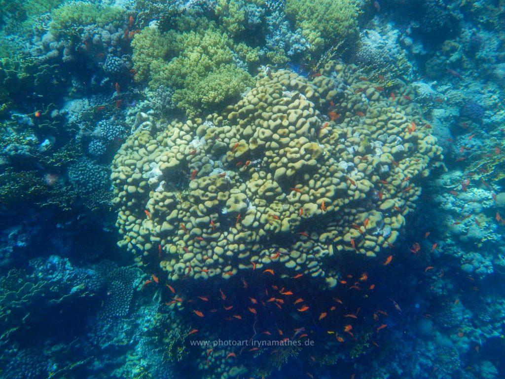 Egypt-unterwasser-web-0444