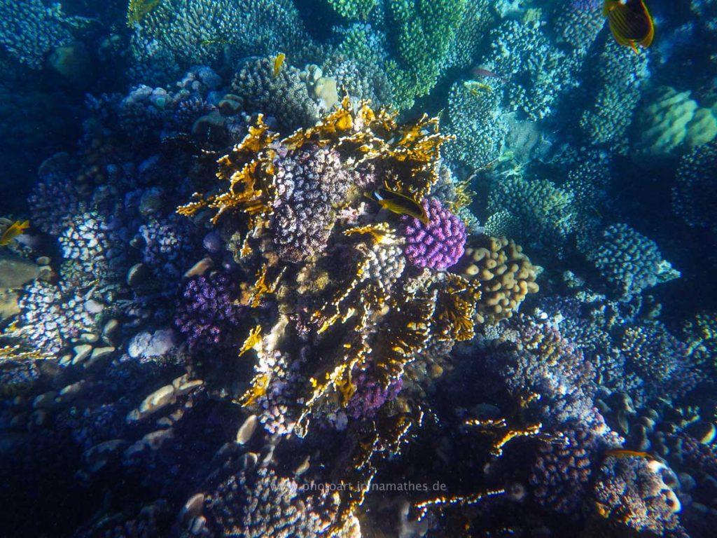 Egypt-unterwasser-web-0452