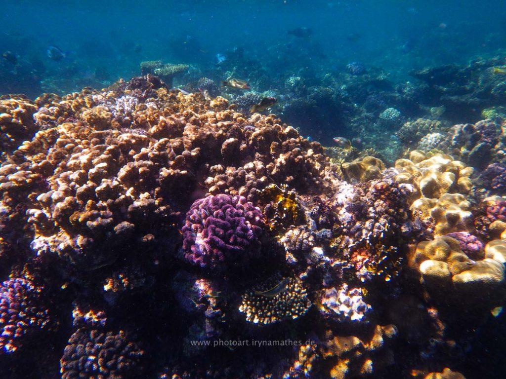 Egypt-unterwasser-web-0455