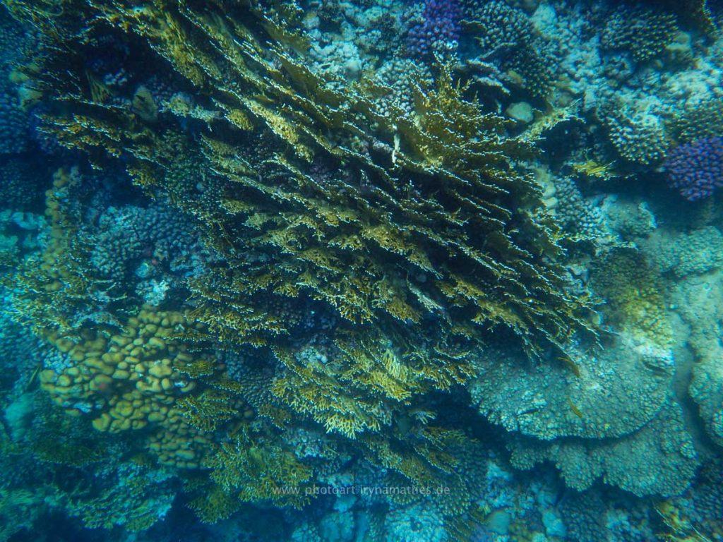 Egypt-unterwasser-web-0484