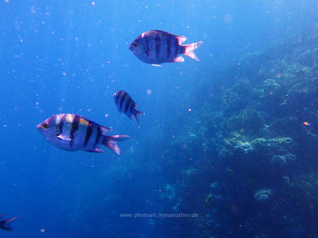 Egypt-unterwasser-web-0526