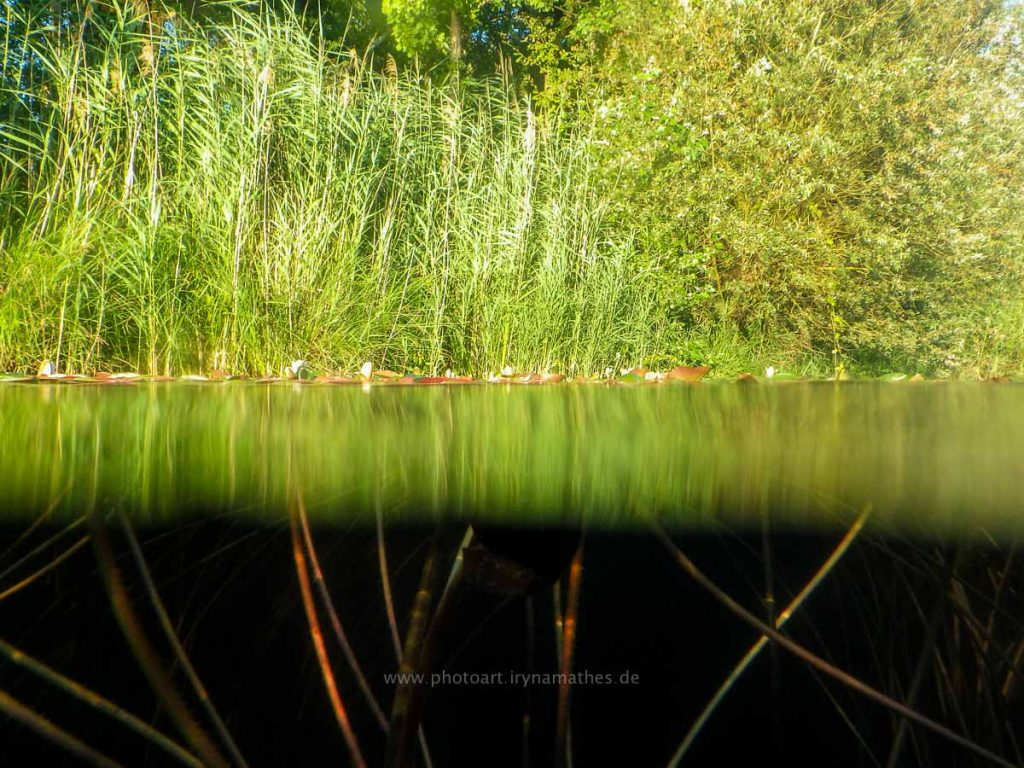 Baggersee-sommer-web-0579