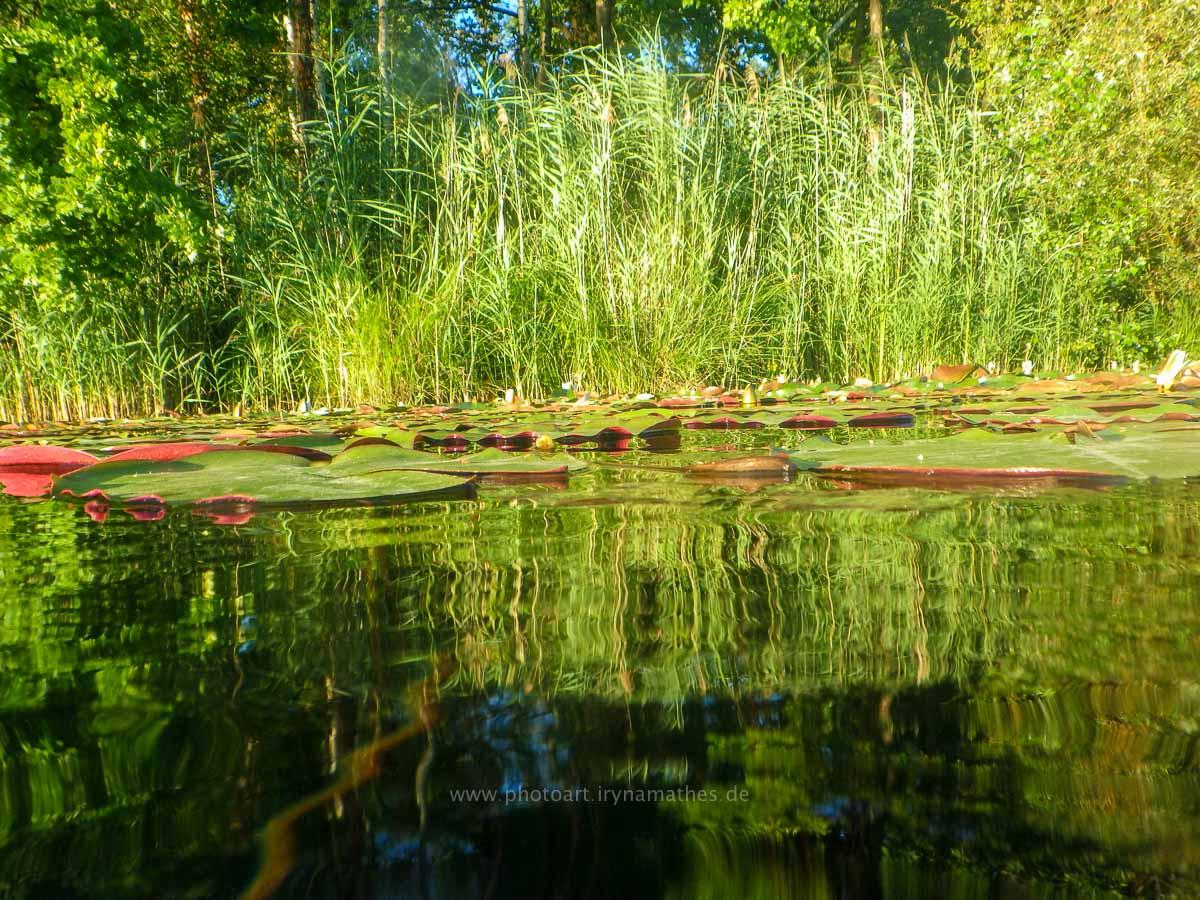 Sommer 2020, Baggersee. Mit Unterwasserkamera fotografieren