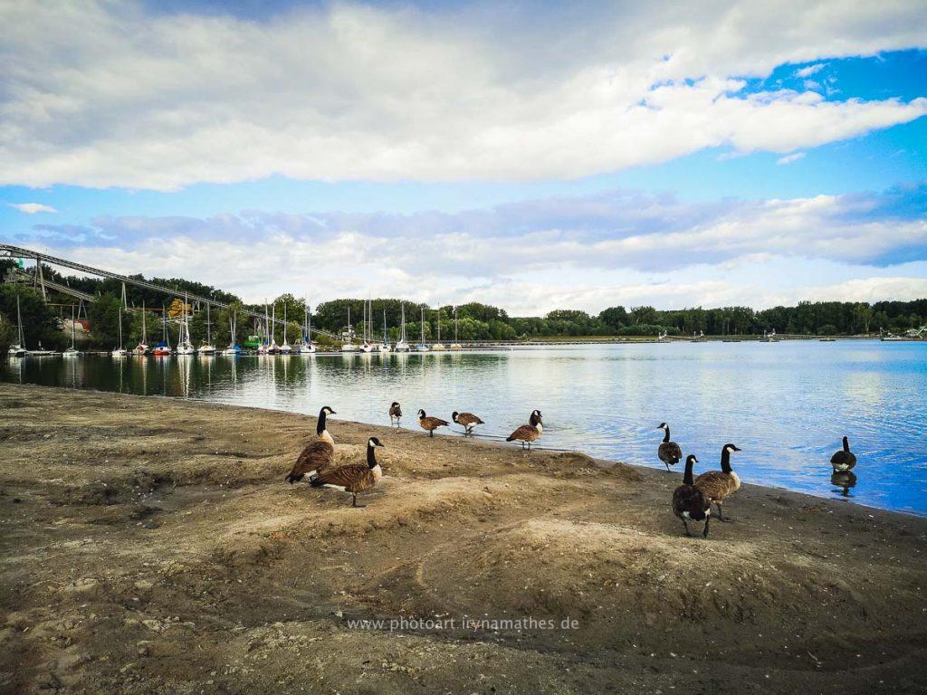Enten-Sommer-Baggersee-2-2