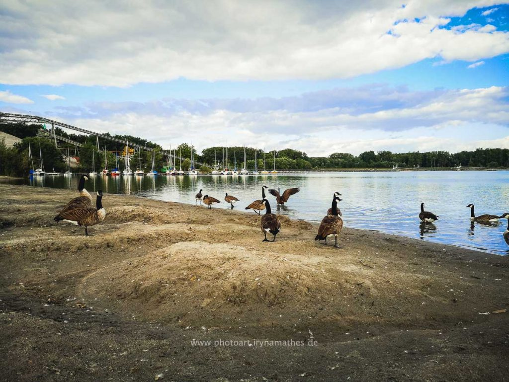 Enten-Sommer-Baggersee-2-3