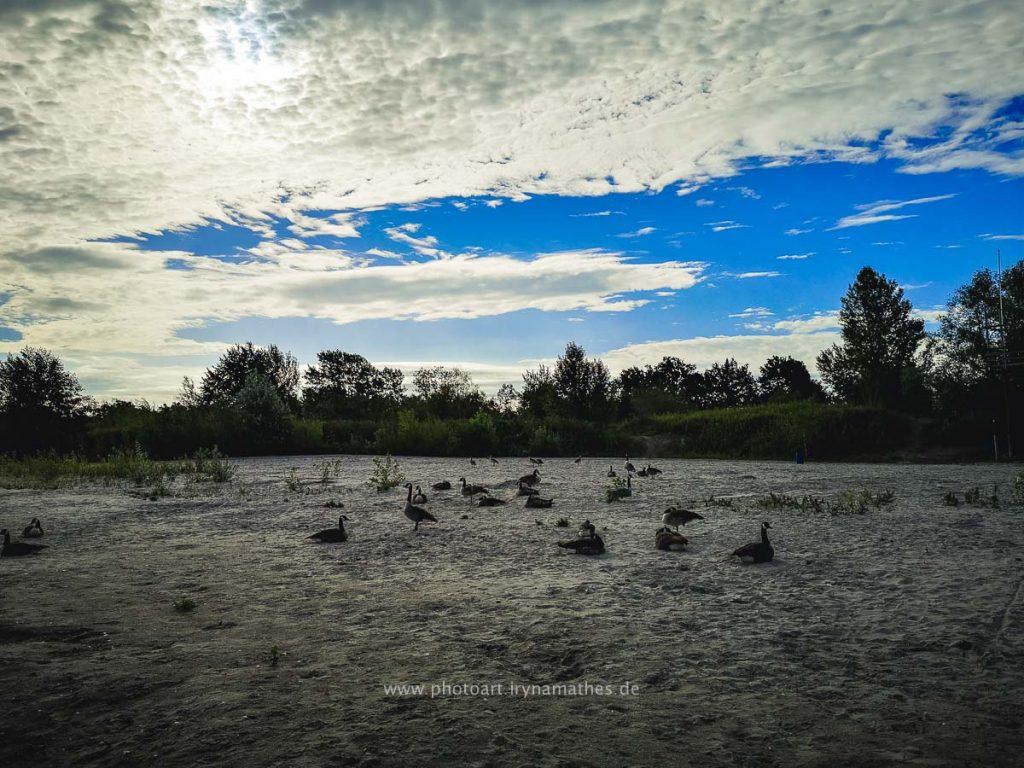 Enten-Sommer-Baggersee-2-4