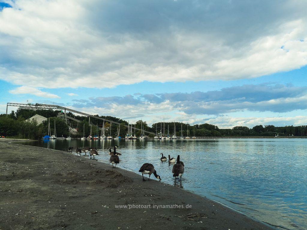 Enten-Sommer-Baggersee-2-5