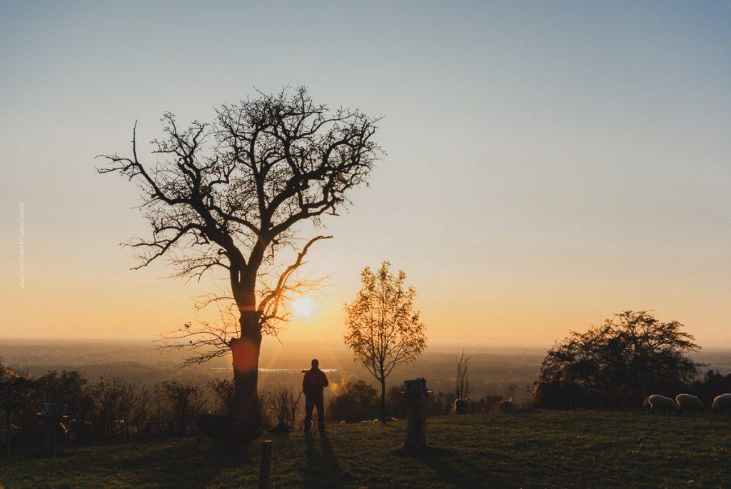 Michaelsberg-Herbst-Abend-web-5390-2
