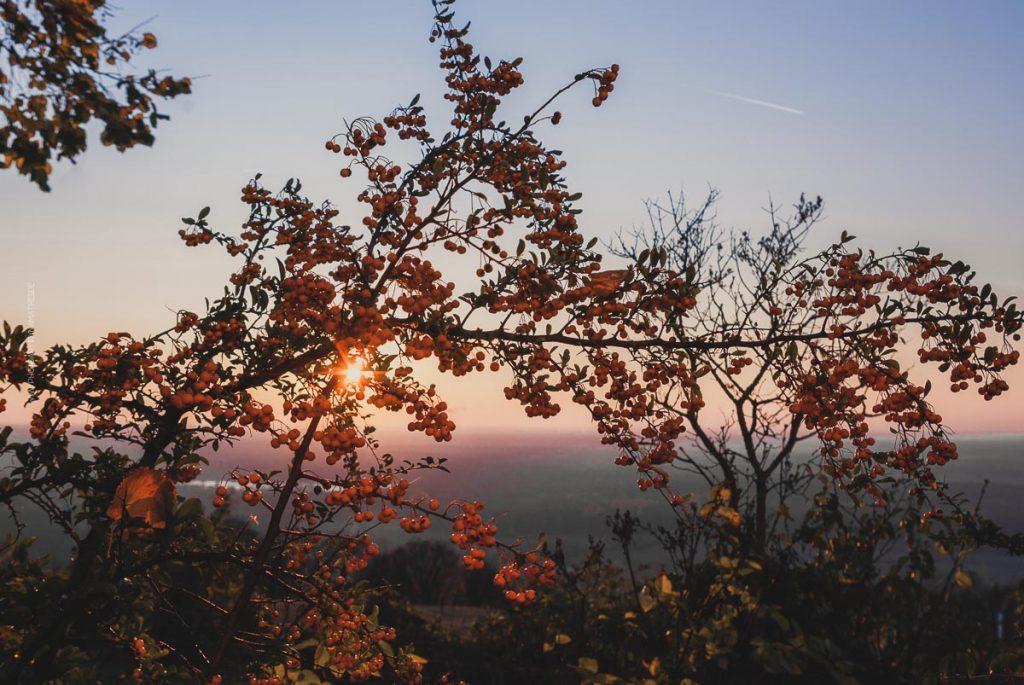 Michaelsberg-Herbst-Abend-web-5398
