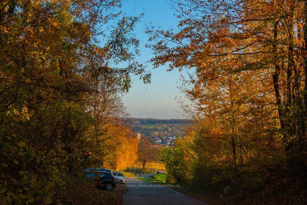 Michaelsberg-Herbst-abendlicht-web-5365