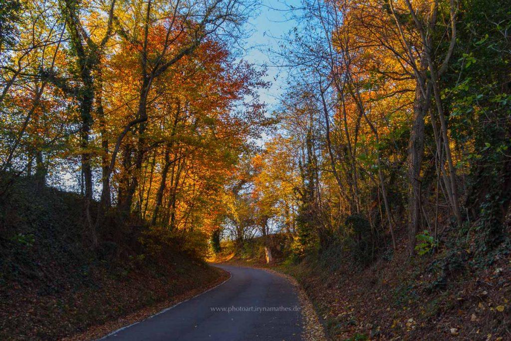 Michaelsberg-Herbst-abendlicht-web-5368