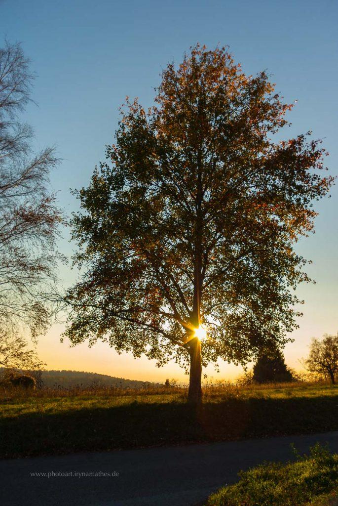 Michaelsberg-Herbst-abendlicht-web-5369