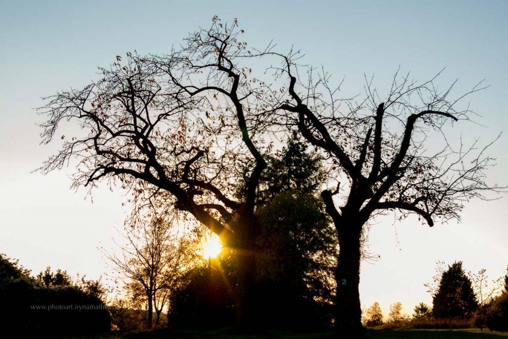 Michaelsberg-Herbst-abendlicht-web-5374